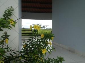 MP00 Flores